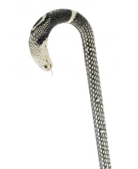 Cobra covered Cane